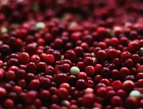 Cranberry Extract 10% Proanthocyanidins, DMAC